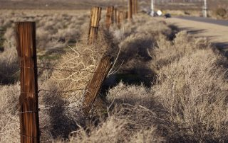 Good Fences - High Desert of CA