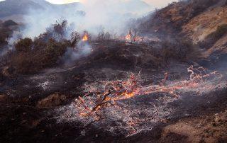 Woolesy Fire in West Hills, CA
